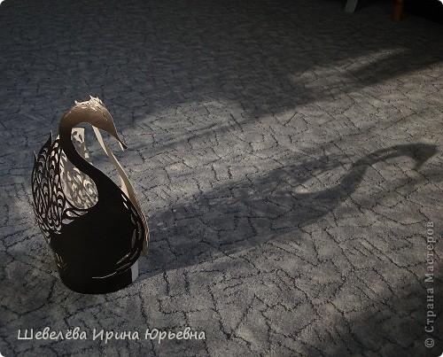 Лебедь чёрный, лебедь белый... фото 4