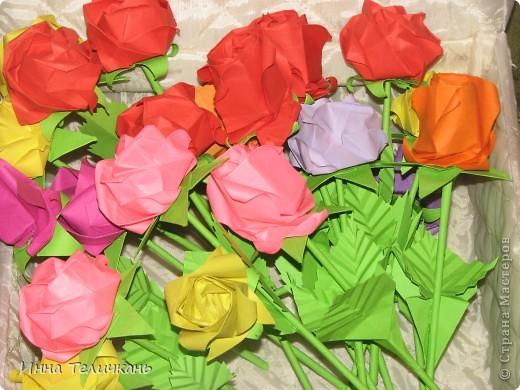Мои разноцветные розы фото 4