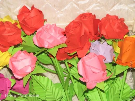 Мои разноцветные розы фото 1