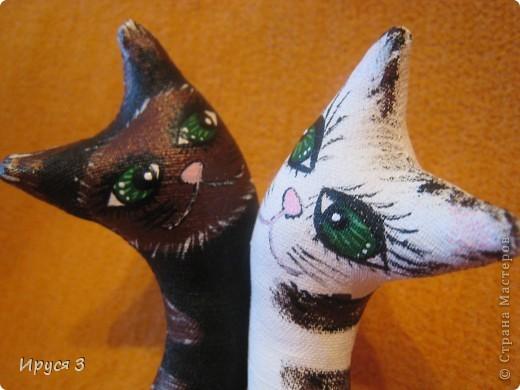 Весенние коты фото 4