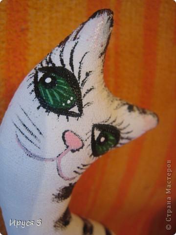 Весенние коты фото 6