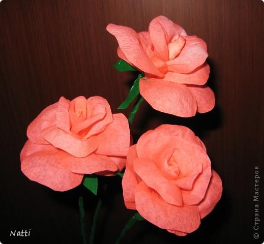 Моя первая роза фото 2