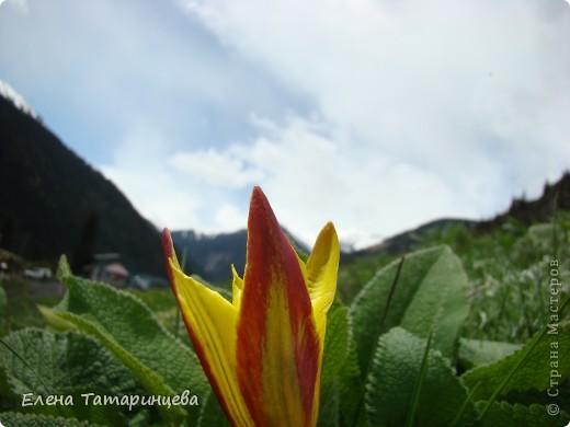 Весенние цветы. фото 4