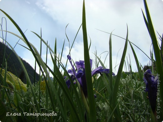 Весенние цветы. фото 6