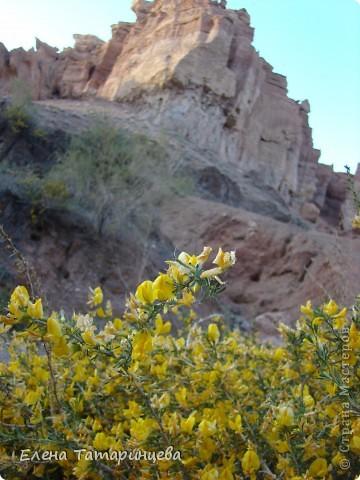 Весенние цветы. фото 7