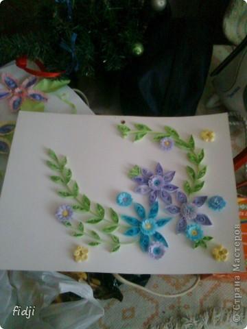цветут цветы фото 2