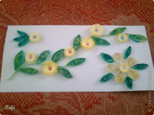 цветут цветы фото 6