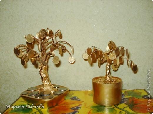 А вот и мои первые денежные деревья )))) фото 1
