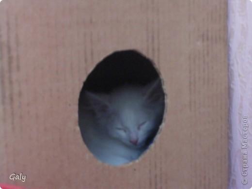 Вот такой комочек появился в нашем доме... фото 16