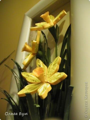 Мои первые нациссики -  к 8 Марта! Солнышки весенние! (Уже подарила!!!) фото 5
