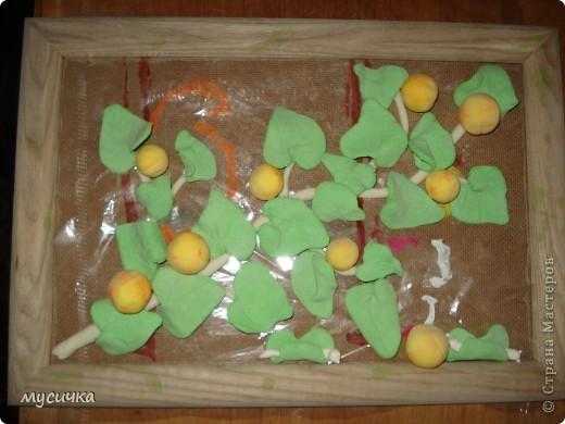 """Вот такая ветка дикой абрикосы получилась, как говорят у нас """"дичка"""". фото 2"""