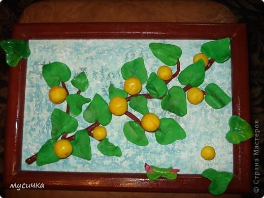 """Вот такая ветка дикой абрикосы получилась, как говорят у нас """"дичка"""". фото 1"""