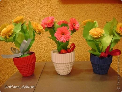 квіти весняні фото 2