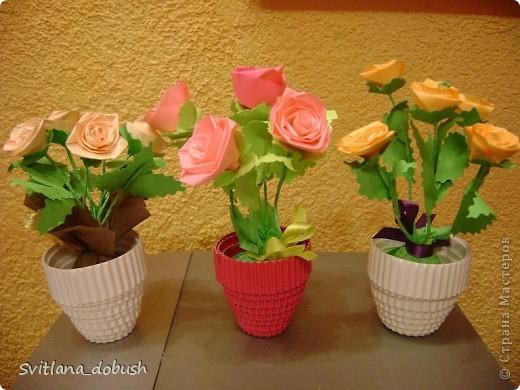 квіти весняні фото 1
