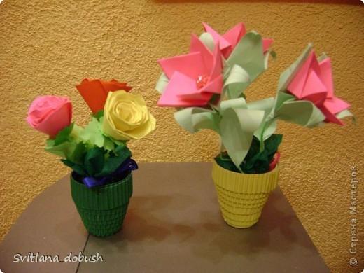квіти весняні фото 3