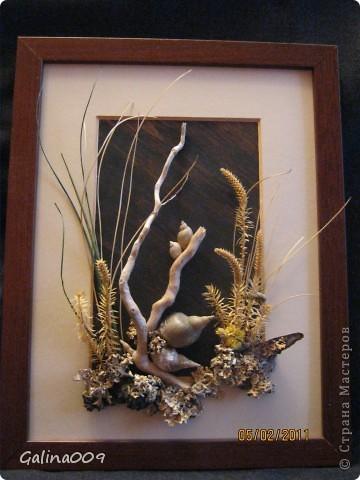 Веточки, ракушки, кора, мох фото 1