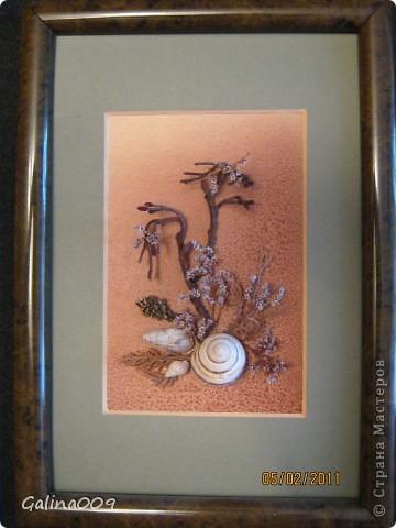 Веточки, ракушки, кора, мох фото 2