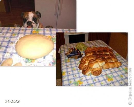 Я Тори, английский бульдог. Перед вами самая грозная,  самая добрая,  самая страшная, самая красивая, самая умная собака.  фото 12