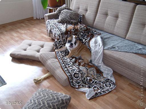 Я Тори, английский бульдог. Перед вами самая грозная,  самая добрая,  самая страшная, самая красивая, самая умная собака.  фото 8