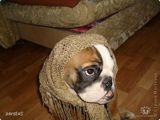 Я Тори, английский бульдог. Перед вами самая грозная,  самая добрая,  самая страшная, самая красивая, самая умная собака.  фото 10