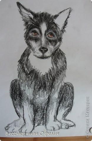 Я пыталась нарисовать мою собаку-Чипа. Правда он получился у меня похожим на волка))))