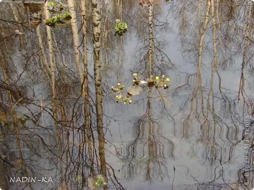 Весна. А какая красота в тайге весной! Я - городской житель,  увидела ее уже будучи взрослой. фото 10