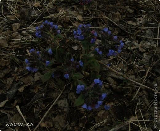 Весна. А какая красота в тайге весной! Я - городской житель,  увидела ее уже будучи взрослой. фото 15