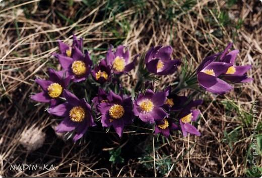 Весна. А какая красота в тайге весной! Я - городской житель,  увидела ее уже будучи взрослой. фото 18