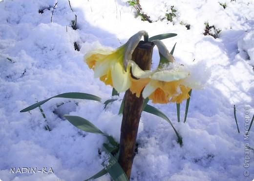 Весна. А какая красота в тайге весной! Я - городской житель,  увидела ее уже будучи взрослой. фото 23