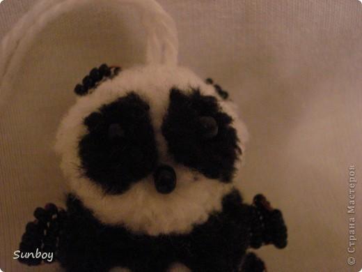 Маленький панда фото 1