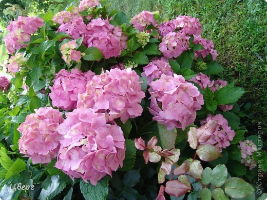 Тюльпаны в Киеве фото 5