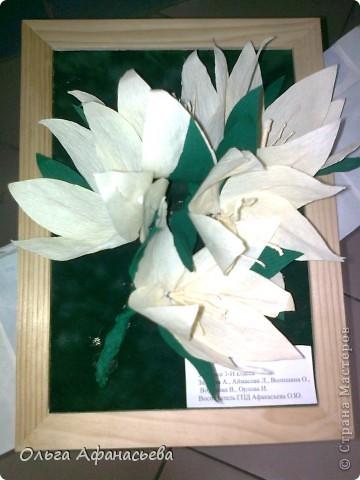 Веточка лилии фото 8