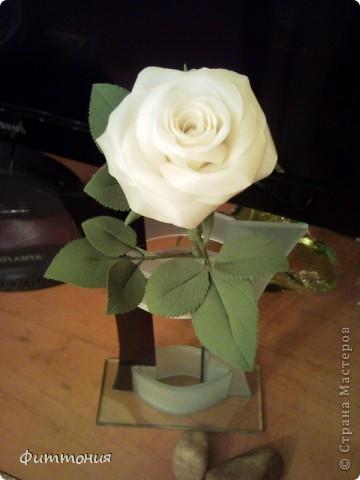 Вот такая белая роза у меня получилась. фото 3