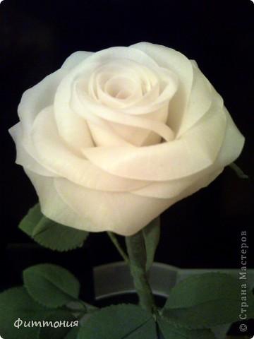 Вот такая белая роза у меня получилась. фото 1