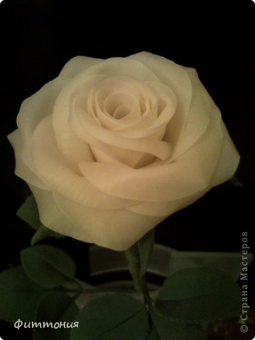 Вот такая белая роза у меня получилась. фото 2