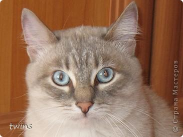голубые глазки фото 1