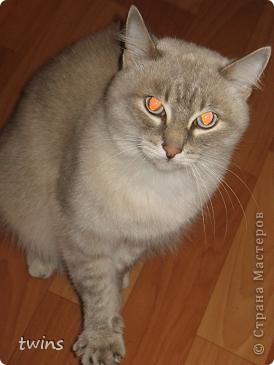 голубые глазки фото 10