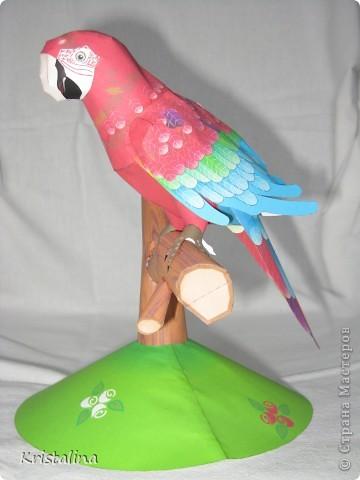 Это мой попугай АРА фото 1