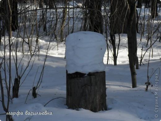 В лесу зима.Мы с друзьями ходили в лес и получили огромное удовольствие от прогулки.Там такая красота.Скоро все растает.Поторопитесь. фото 5