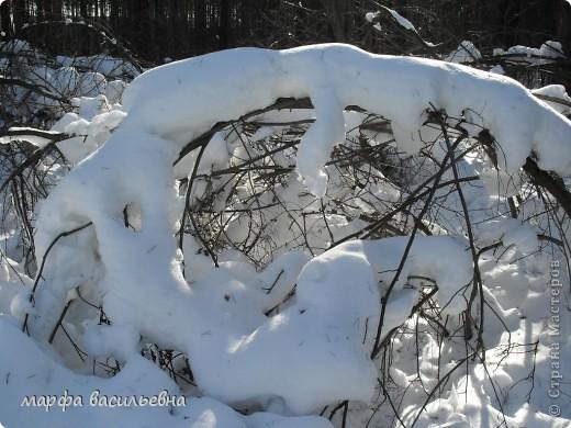В лесу зима.Мы с друзьями ходили в лес и получили огромное удовольствие от прогулки.Там такая красота.Скоро все растает.Поторопитесь. фото 8
