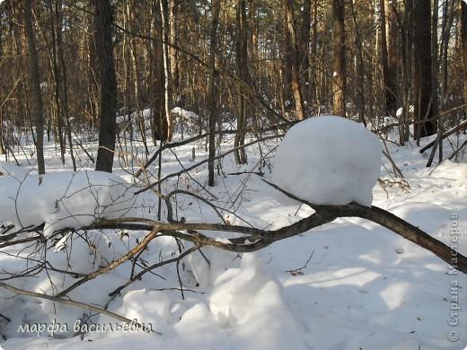 В лесу зима.Мы с друзьями ходили в лес и получили огромное удовольствие от прогулки.Там такая красота.Скоро все растает.Поторопитесь. фото 12