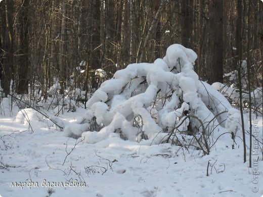 В лесу зима.Мы с друзьями ходили в лес и получили огромное удовольствие от прогулки.Там такая красота.Скоро все растает.Поторопитесь. фото 11