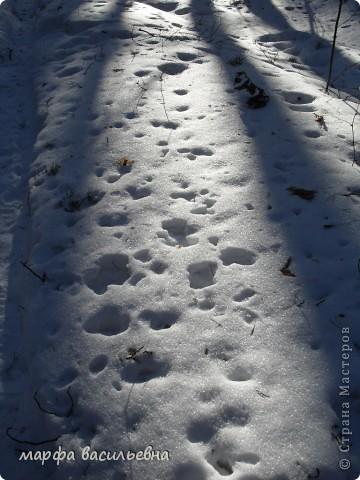 В лесу зима.Мы с друзьями ходили в лес и получили огромное удовольствие от прогулки.Там такая красота.Скоро все растает.Поторопитесь. фото 13