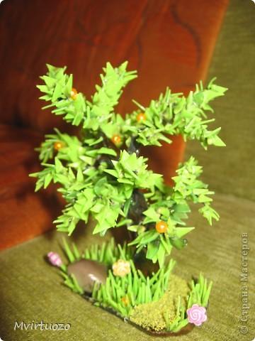Вот такое апельсиновое деревце выросло у меня :) Подарила подружке фото 3