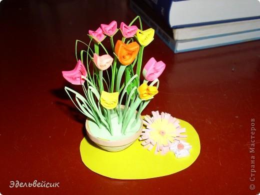 Мои цветочки)))) фото 2