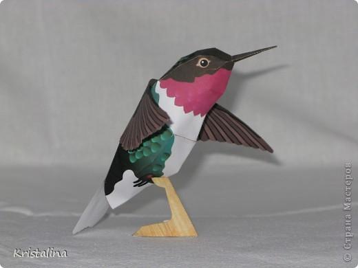 Это мой попугай АРА фото 4