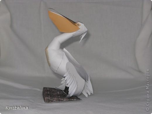 Это мой попугай АРА фото 3