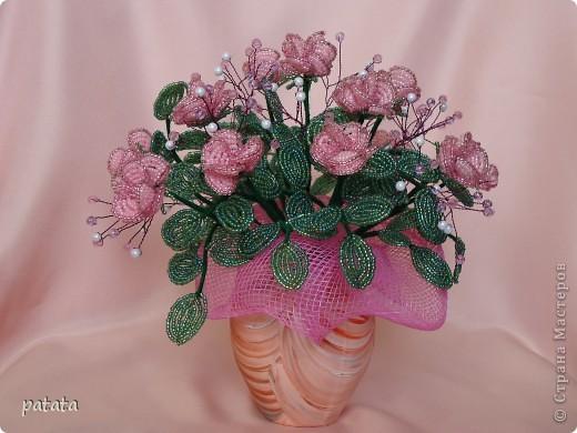 Чайные розы фото 1