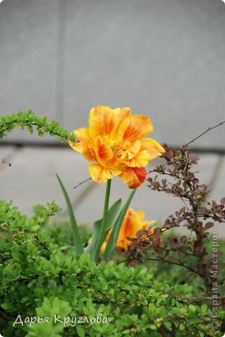 Цветы фото 8
