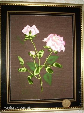 Розовая розочка фото 1